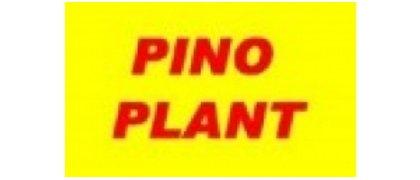 Pino Plant