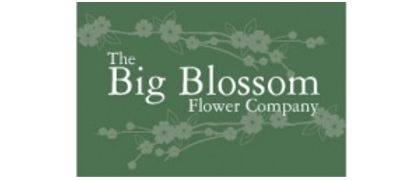 Big Blossom Flowers
