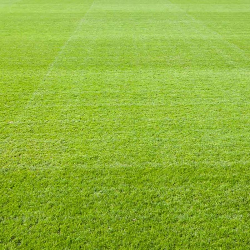 Pitch Improvement works