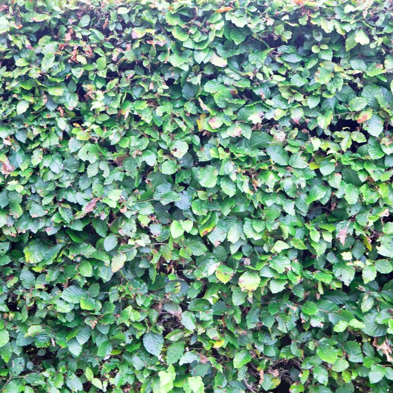 9th December-First XV away game cancelled, don't travel!