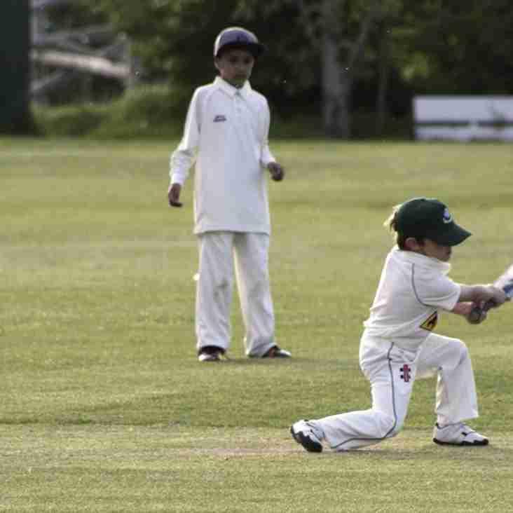 Junior Cricket starts Friday 4th May