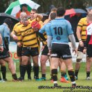 Best in class Canterbury prove too strong for valiant Bees