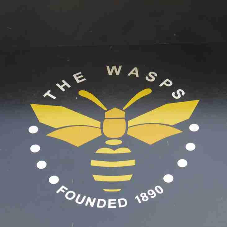 Wasps bring in Premier Division striker