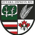 Once a Hawk now an Osprey