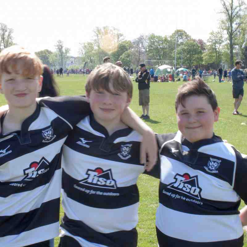 Rugby Festival 7 P7s May 2017