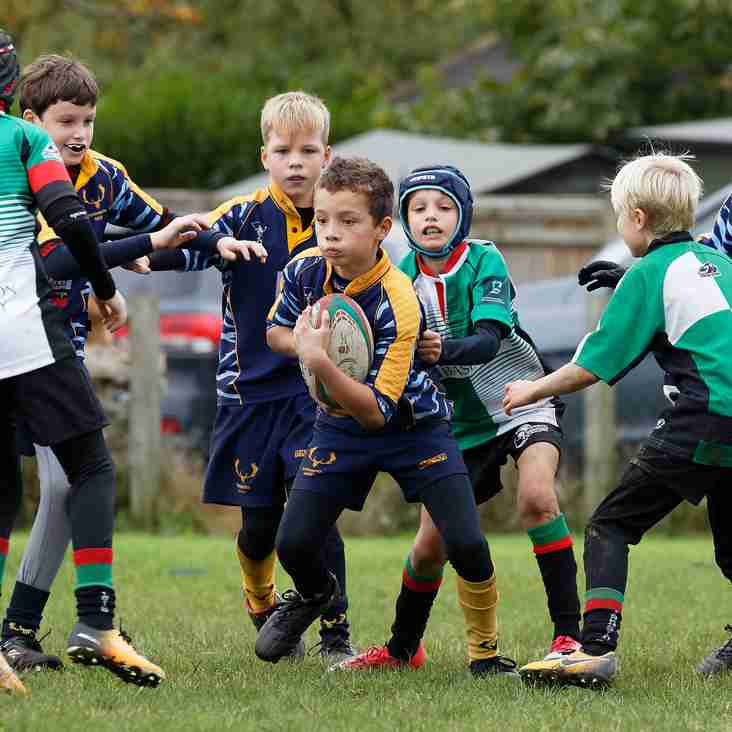 U11 News for 5th November