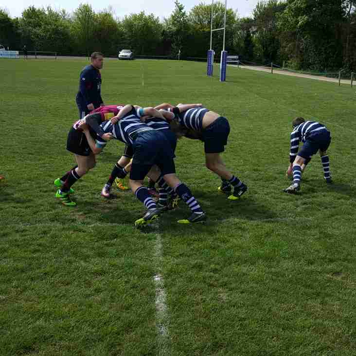 U13s Hawks Finish 5th at the Kent Sevens