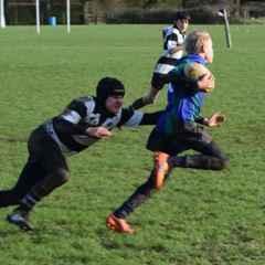 U13's (Pilgrims) v Farnham RFC (B) - 10th January 2016