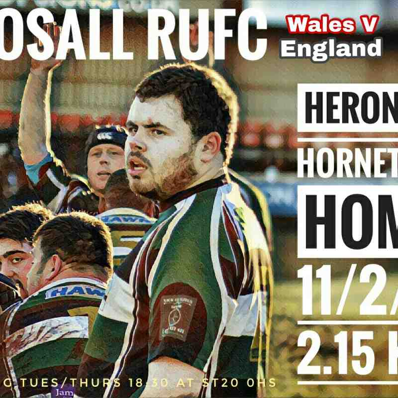 HERONS V HORNETS