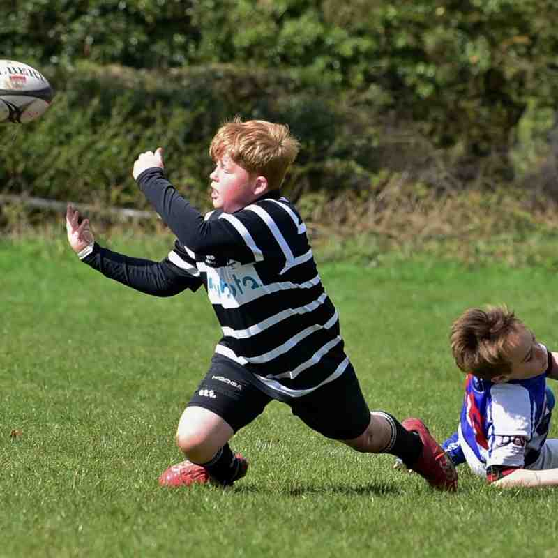 Tring RFC Mini Rugby Festival April 2016 (U10's)