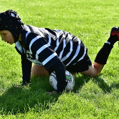 High Wycombe RFC Vs. Chinnor RFC U11's 02/10/16