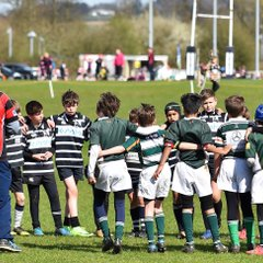 Marlow Rugby Festival 26/03/17