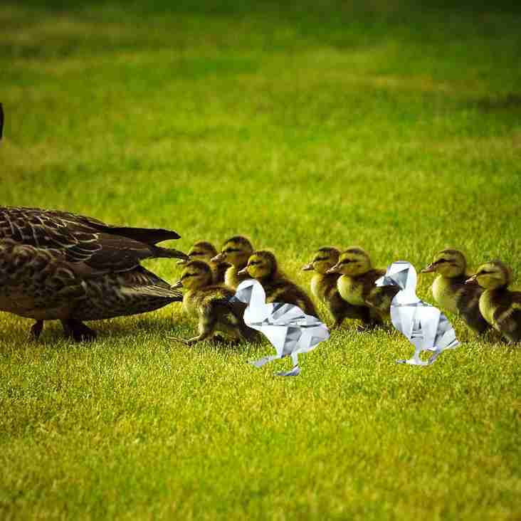 What is a Diamond Duck?
