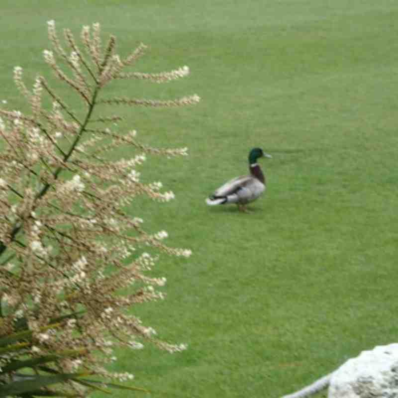 NMCC Duck