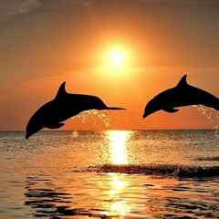 Dolphins should have stayed out of the Heat!
