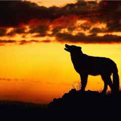 Wolves blinded in the Heatwave - Heatwave 27 - 3 Warrington Wolves