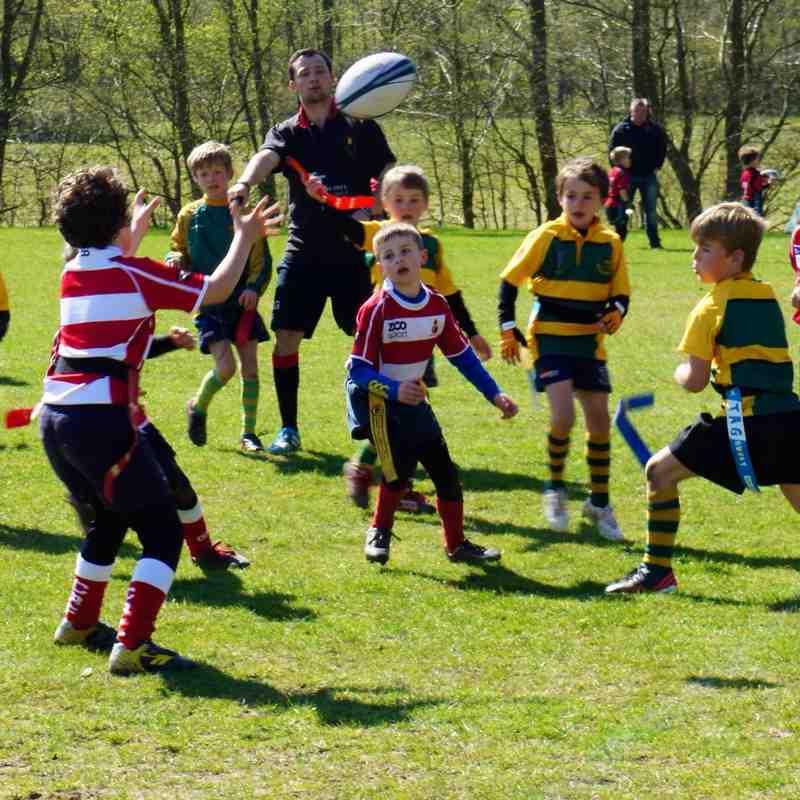 Sussex Mini Rugby Final 12/04/15 - U8 Champions