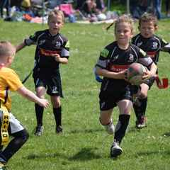St Albans Rugby Festival