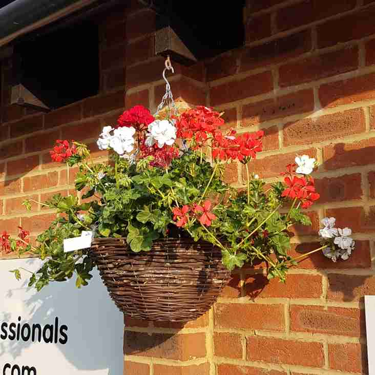 Hanging baskets are back!