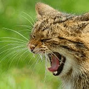 Kettering 0-3 Wildcatz