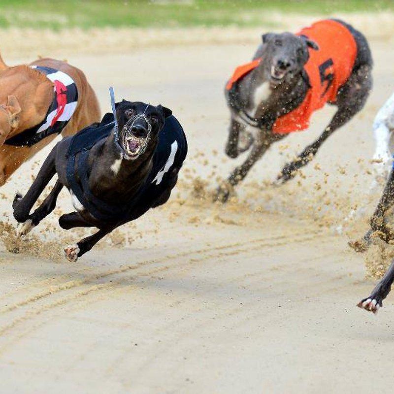 CHC Social - Dog Racing