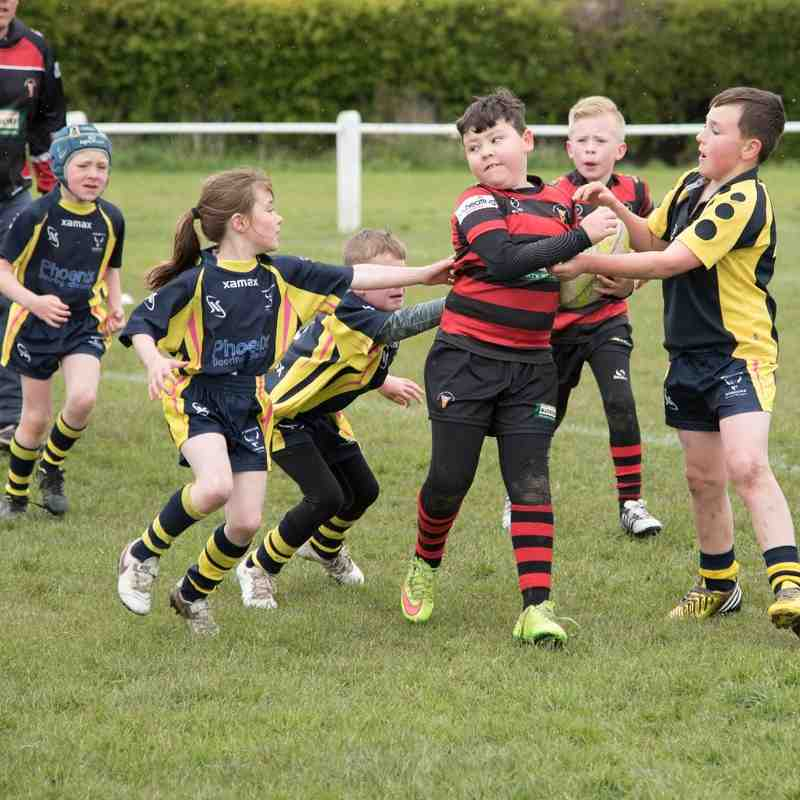 Under 8's  v Whinmoor Warriors - 1st May 2016