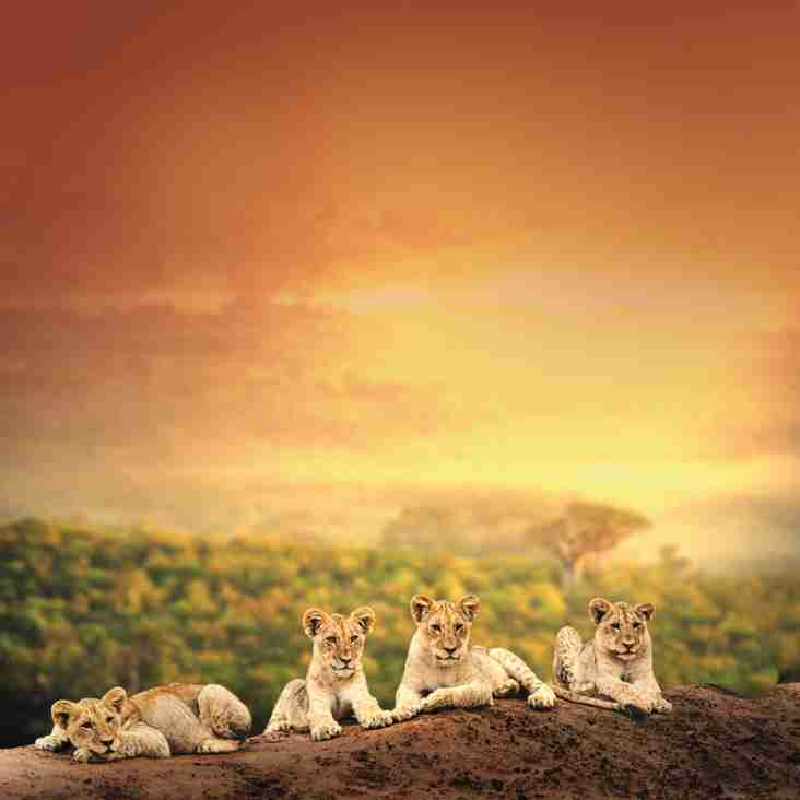 Grand Tour of South Africa - Save up to £1,280 per couple!