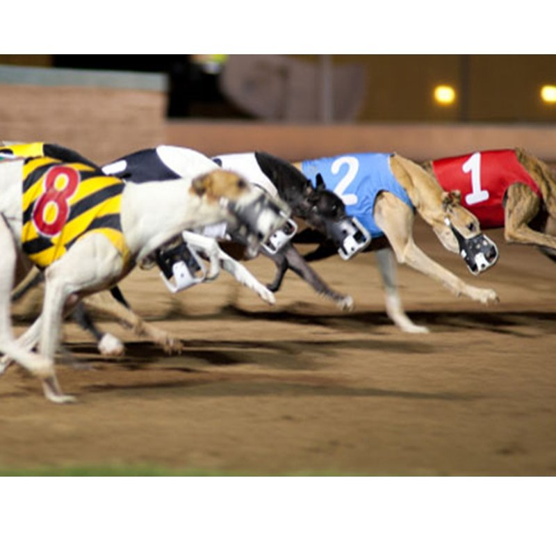 A Night at the Dogs Friday 14th July