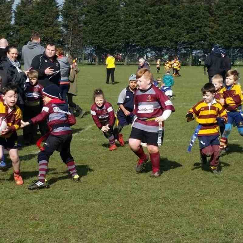 Under 7's Thurrock Festival Of Rugby