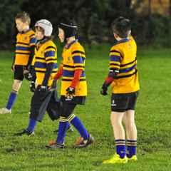 Mini Rugby - Sun 31 Jan
