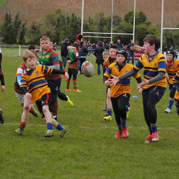 Mini Rugby - 30th April