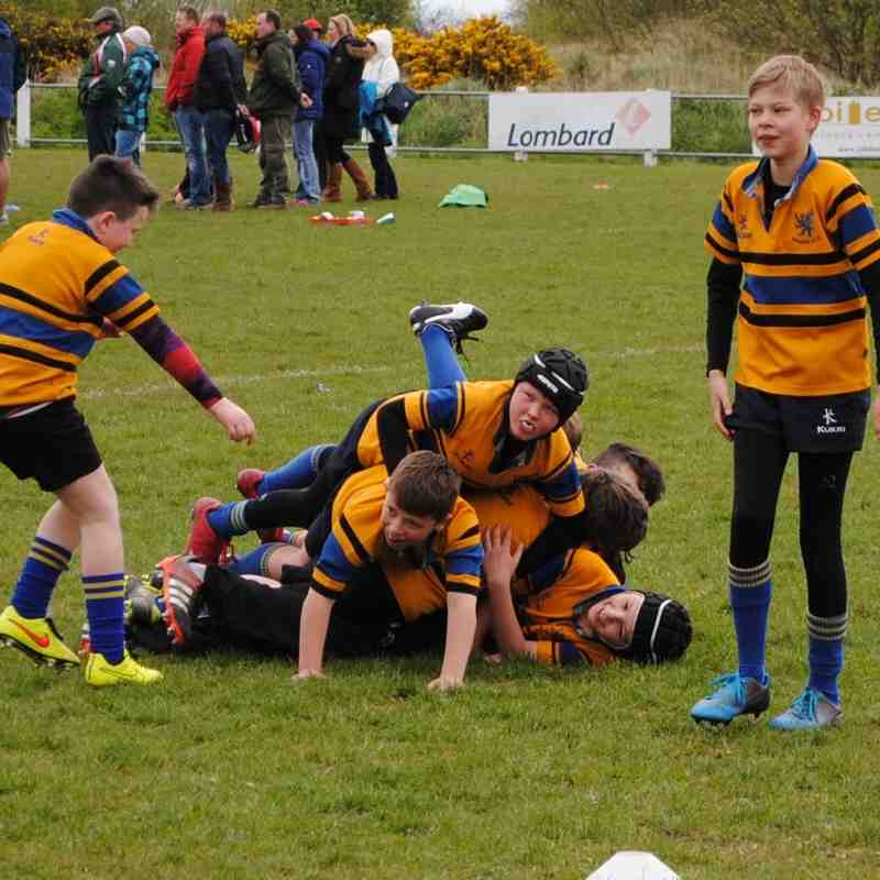24/4/16  Ards Mini Rugby Festival