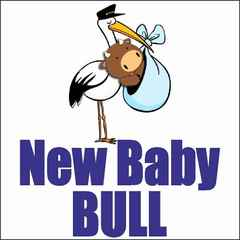 NEW BABY BULL