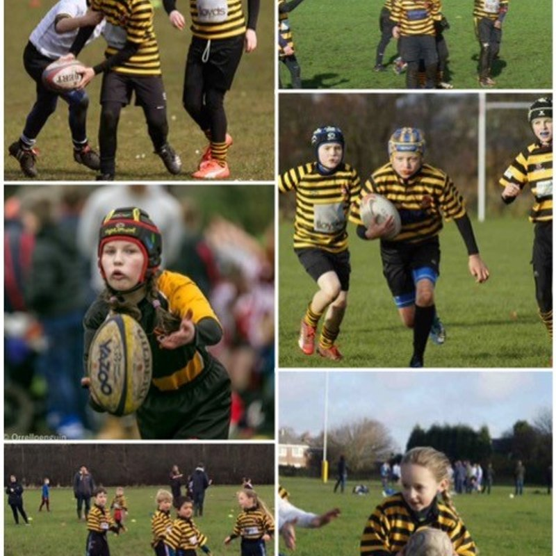 It's here – it's finally Saturday and the Orrell Rugby Mini and Junior Section Fun Day,