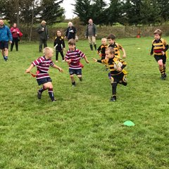 Ely Tigers U7 host Cambridgeshire Festival of Rugby