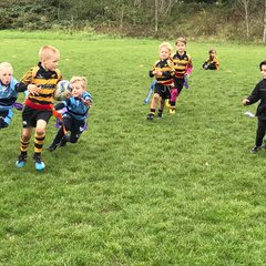 Tigers U7 host Cambridgeshire festival of Rugby