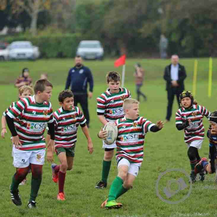 AOE to host Year 7 Inter Schools Rugby Festival