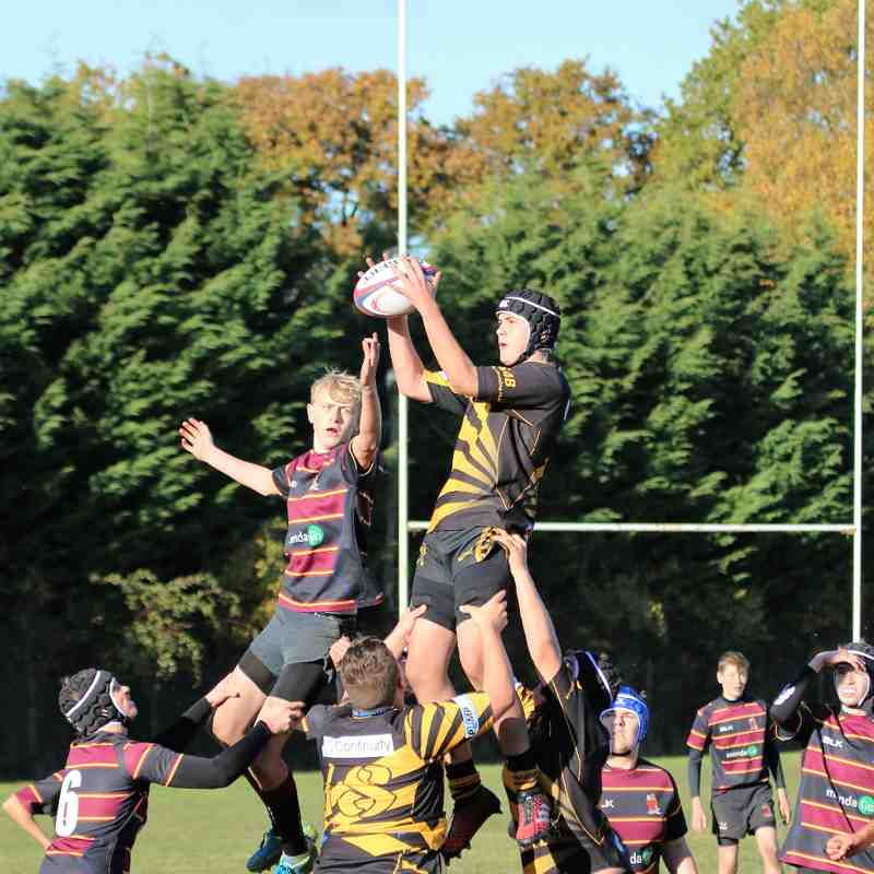 Tadley Tigers RFC vs. Hungerford RFC