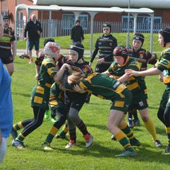 West Park RUFC U12's V LSH and Tarleton U12's (02.04.17)