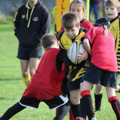 Dundee Wasps this Sunday 25th January