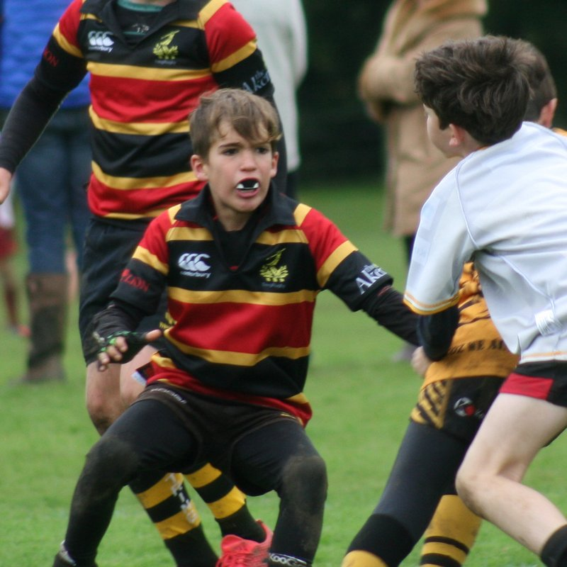 U12s at Old Albanians Festival of Rugby
