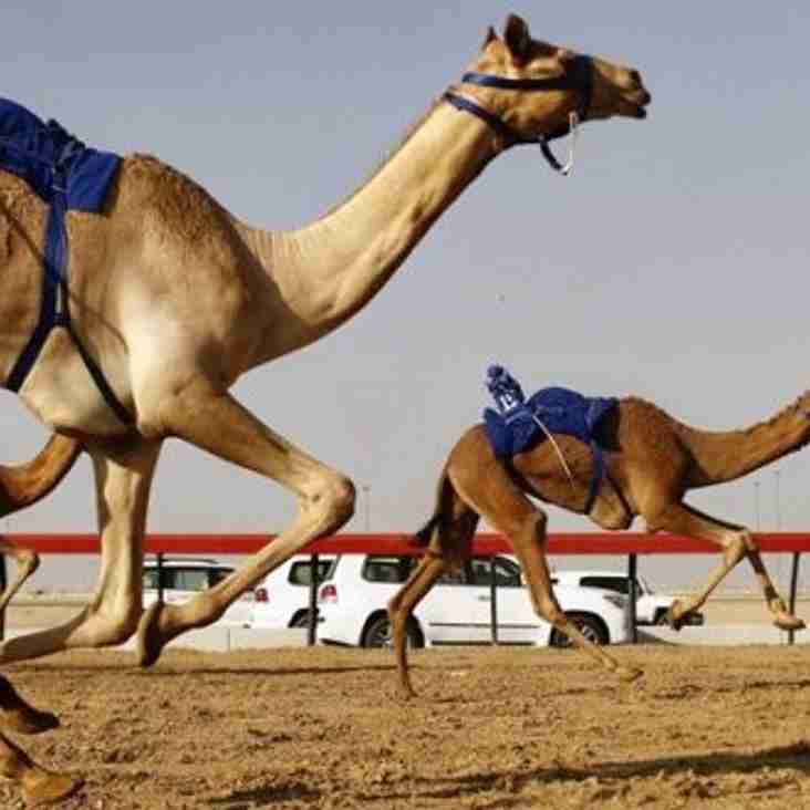 Reminder - Camel Racing Comes To AFC
