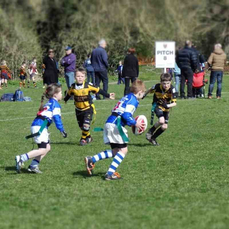 Hertfordshire County U8 Tag Rugby Festival 2013