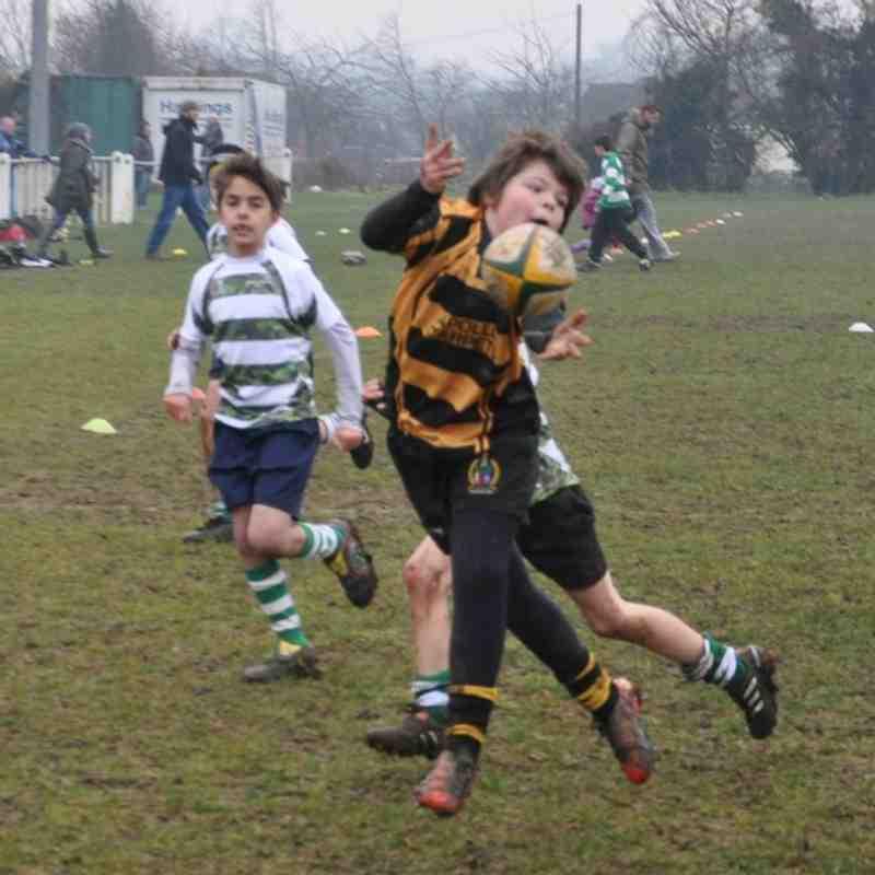 Hinckley RFC U11`s Vs South Leicester RFC U11`s Jan 29th 2012