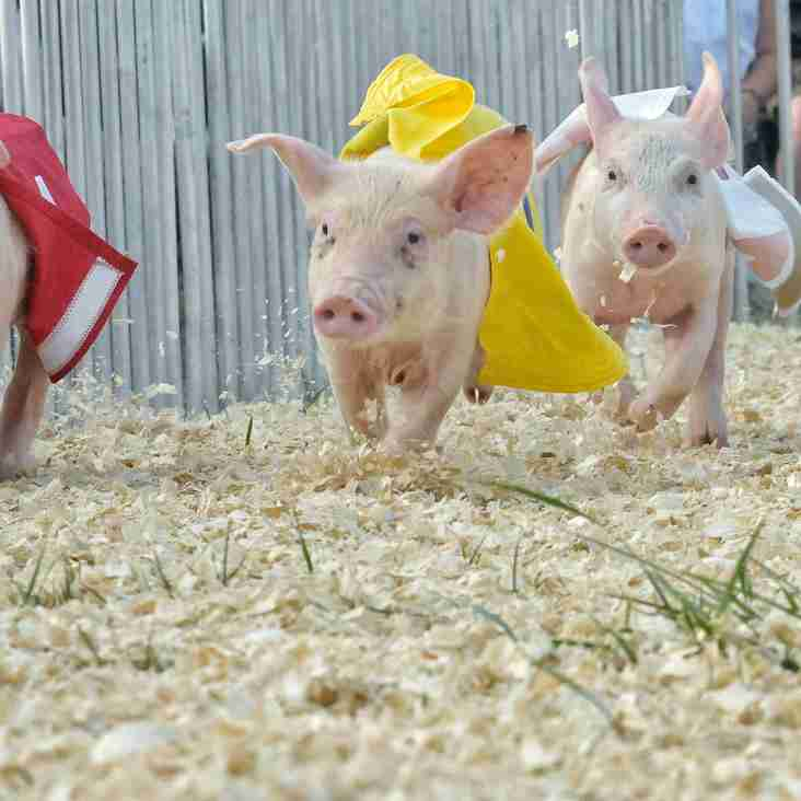 Pig Racing Dates Confirmed! 24th March 2018