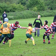 Under 8's Crusaders v Golbourne