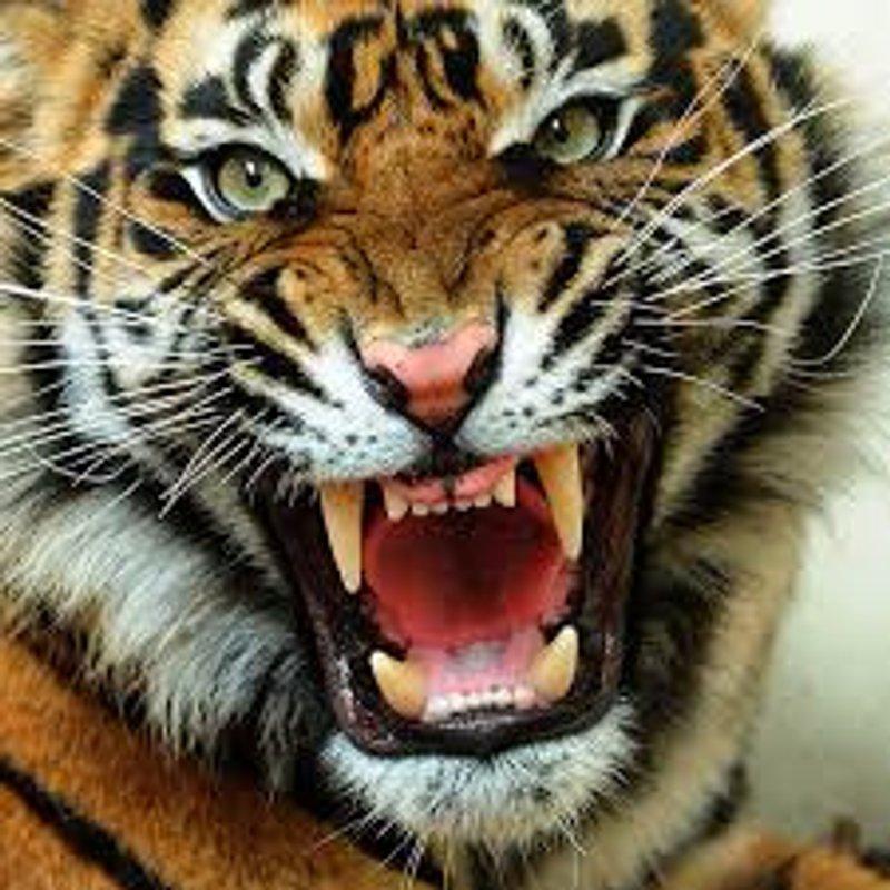 TIGERS PRESENTATION NIGHT