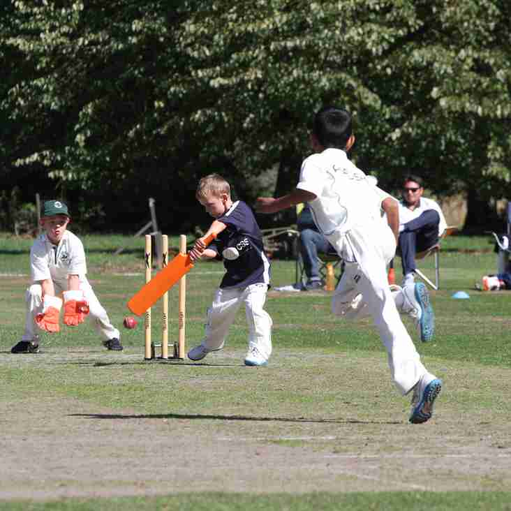 Junior Cricket 2019