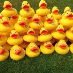 Duck Race - Help Needed