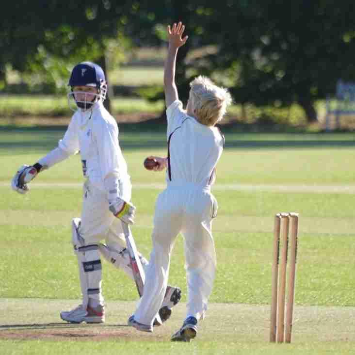 Junior Cricket 2016